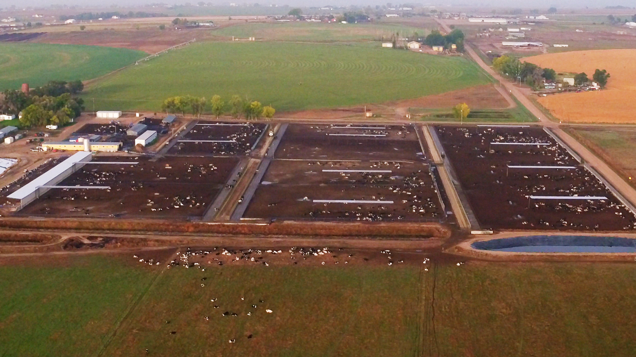 How millions of cartons of 'organic' milk contain an oil brewed in industrial vats of algae