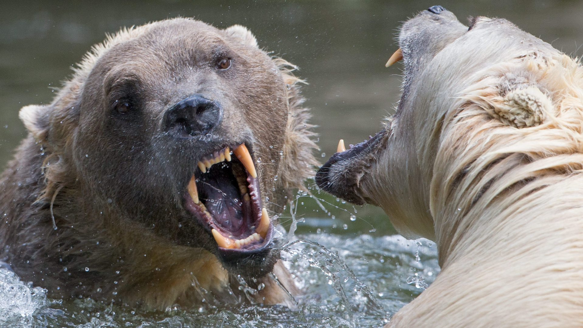 The true story of two fatal grizzly bear attacks that changed our relationship with wildlife