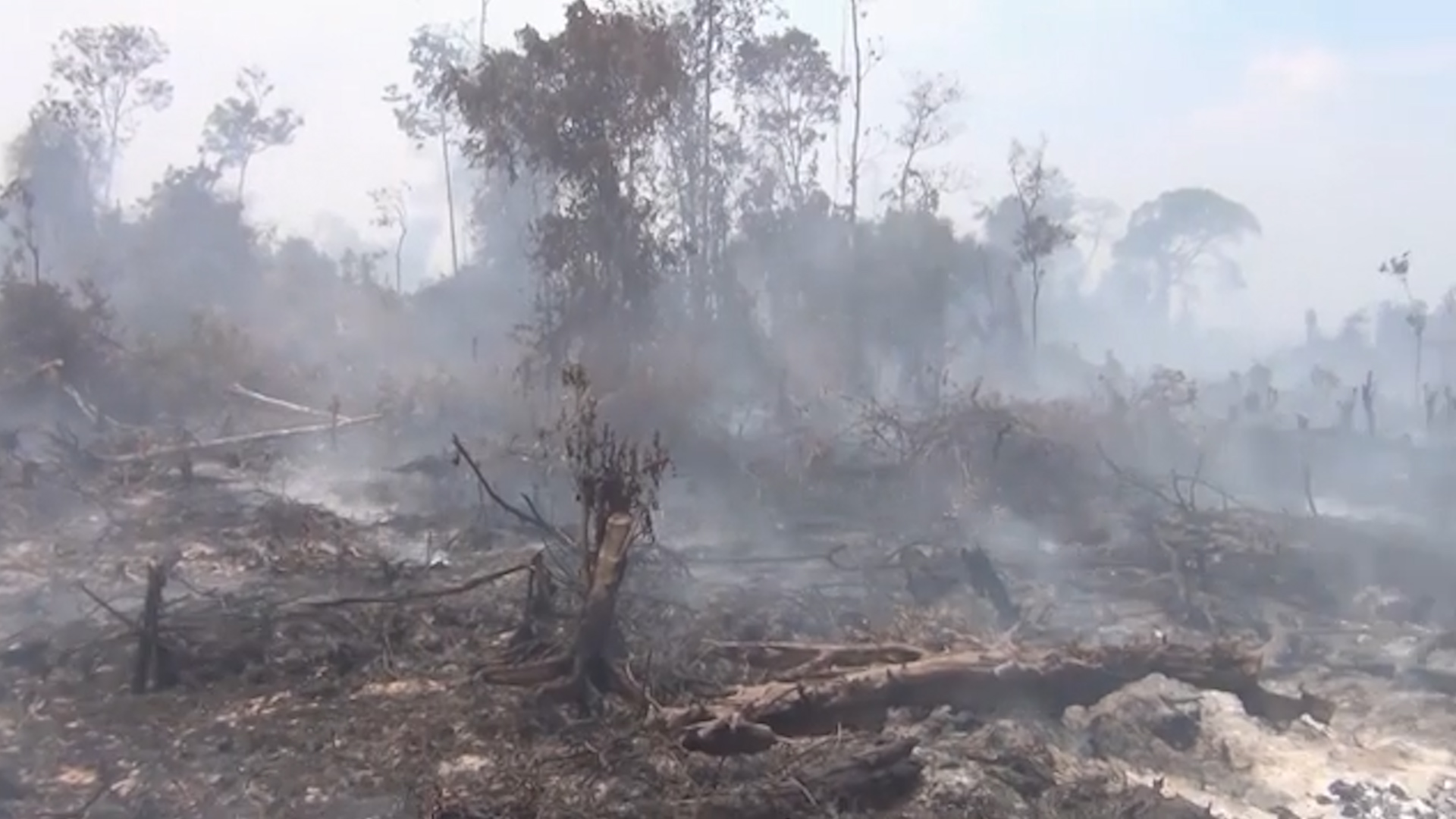 Wildfires in Indonesia have ravaged 800,000 acres. Palm oil farmers are mostly to blame.