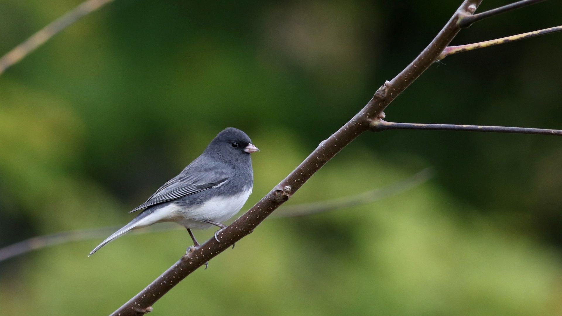 North America has lost 3 billion birds in 50 years
