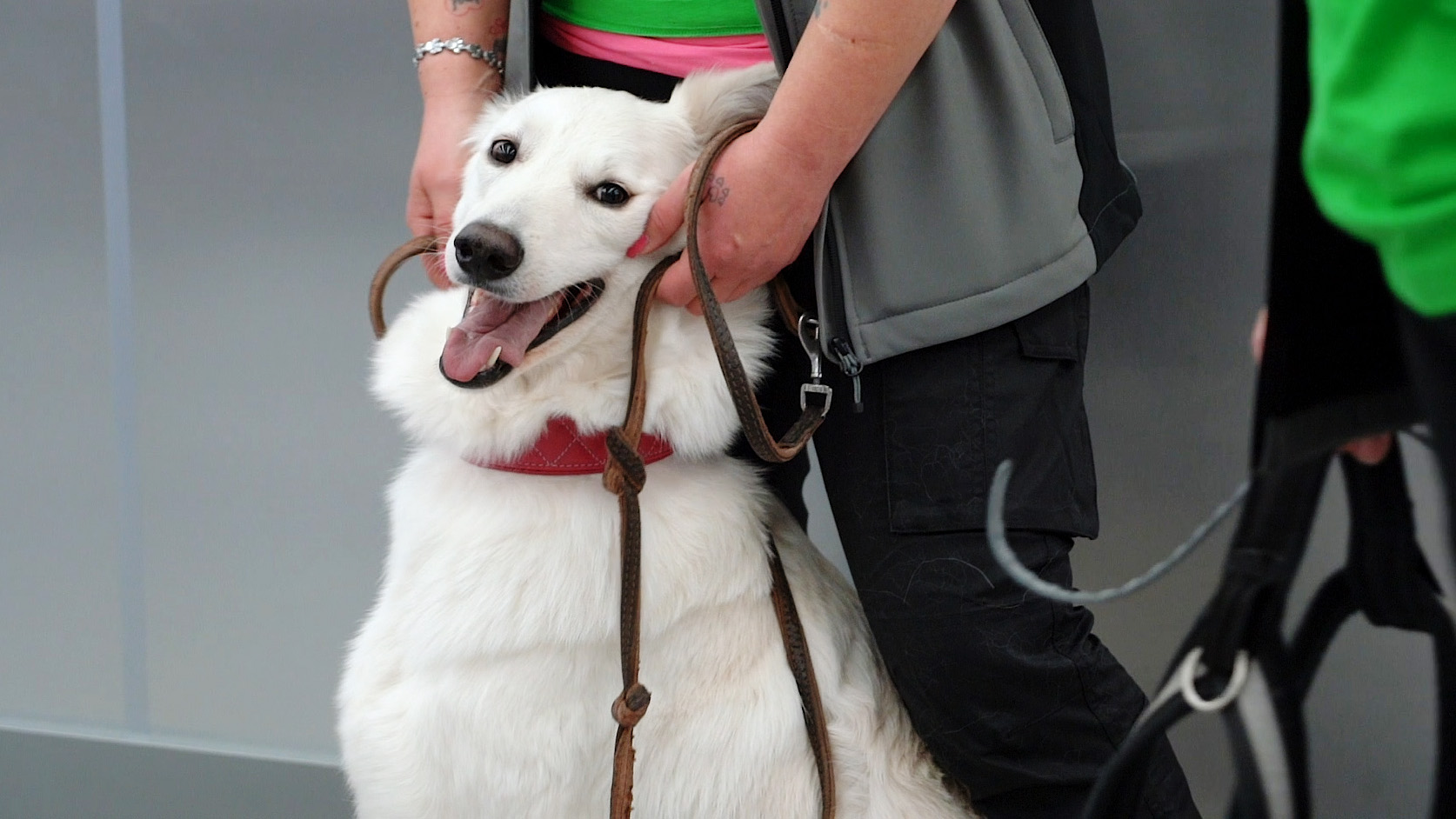 Finnországban kutyákkal szagoltatják ki a koronavírust