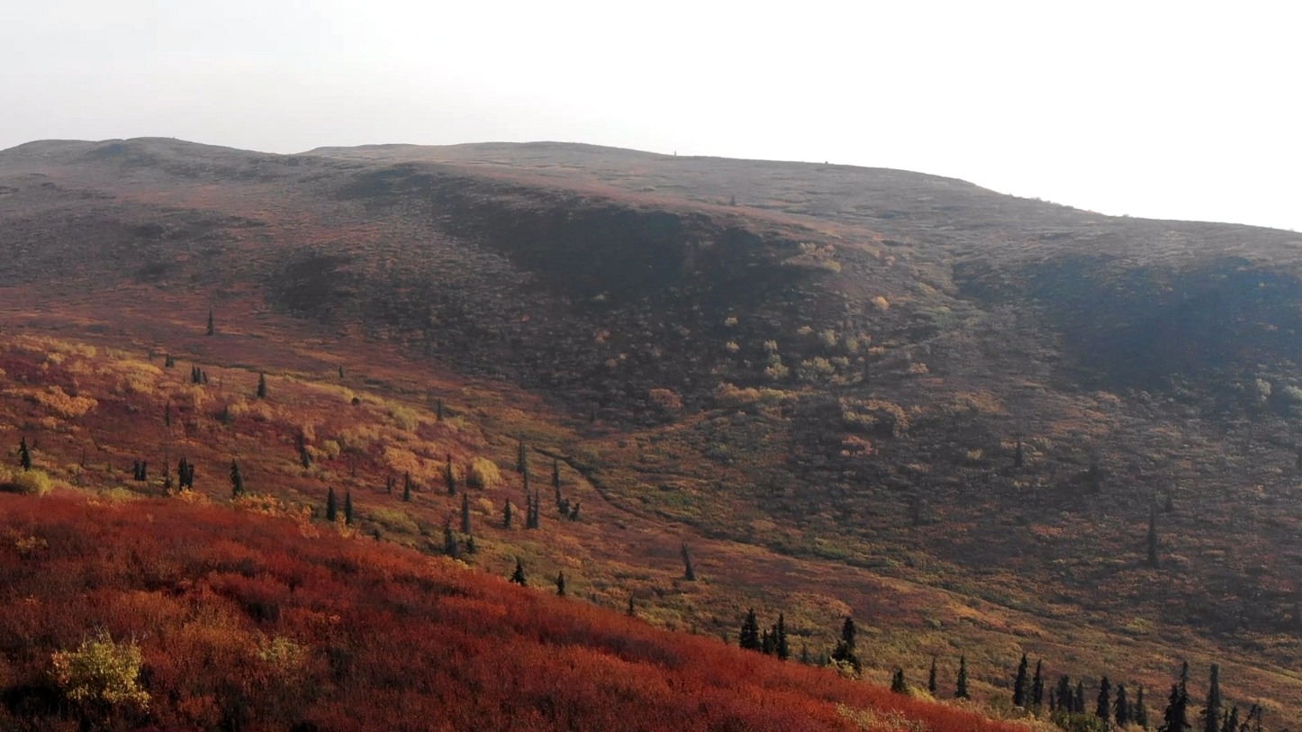 Photos: Beautiful fall color emerged over Alaska's tundra after strange summer