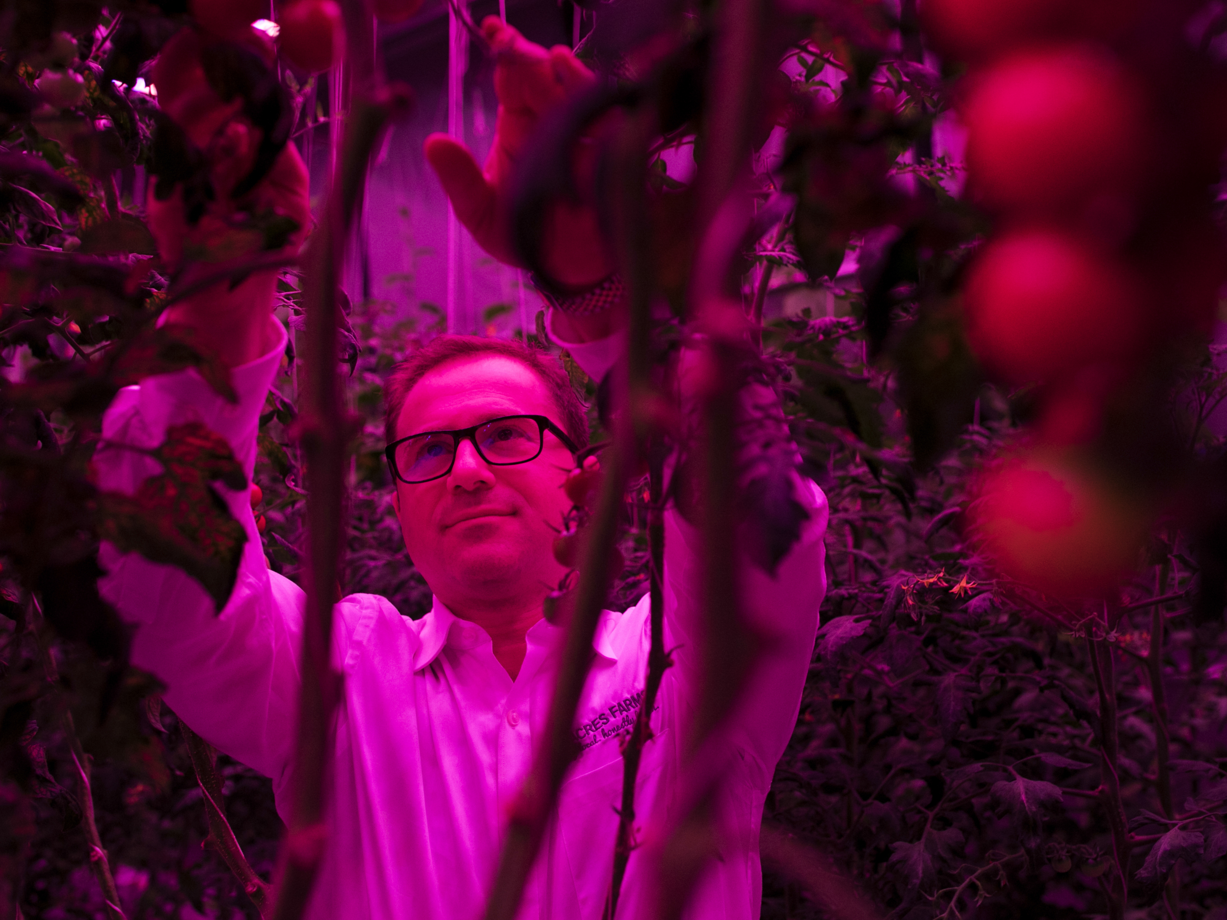 High-tech farmers are using LED lights in ways that seem to