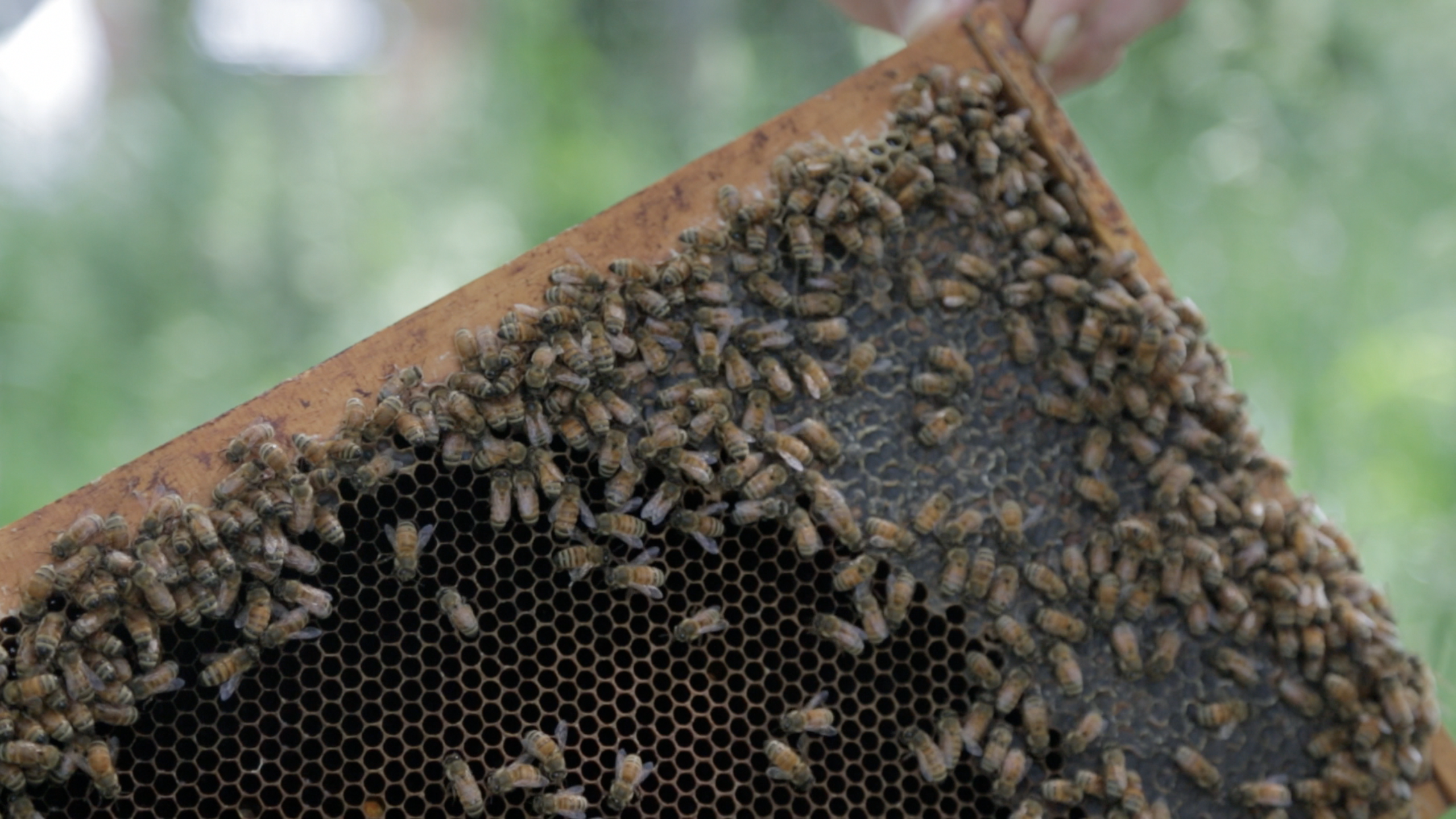 How the White House plans to help the humble bee maintain its buzz