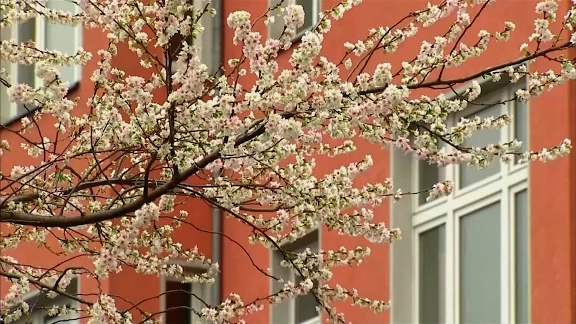 Germany Decked With Flowers Instead Of Snow The Washington Post
