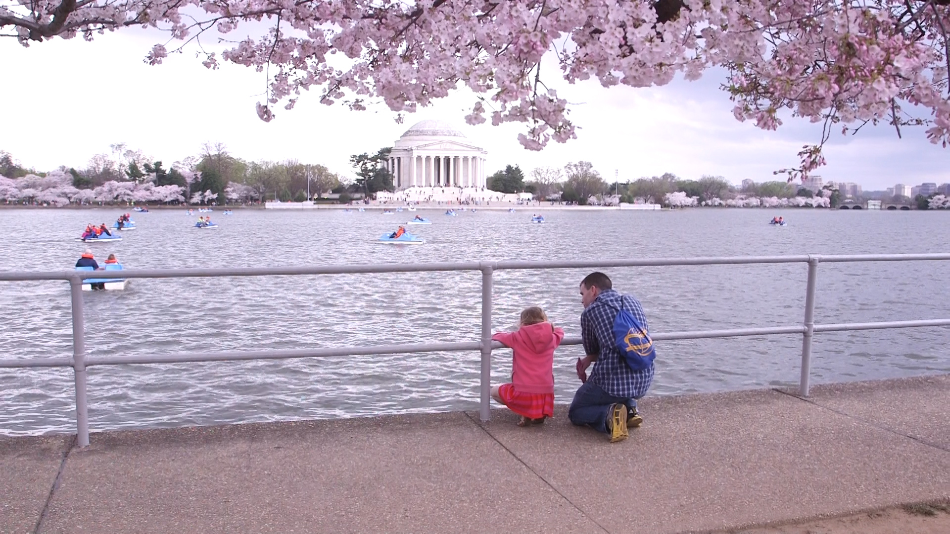 'Blink twice' and they'll be gone: What the cherry blossoms can teach us about the nature of life
