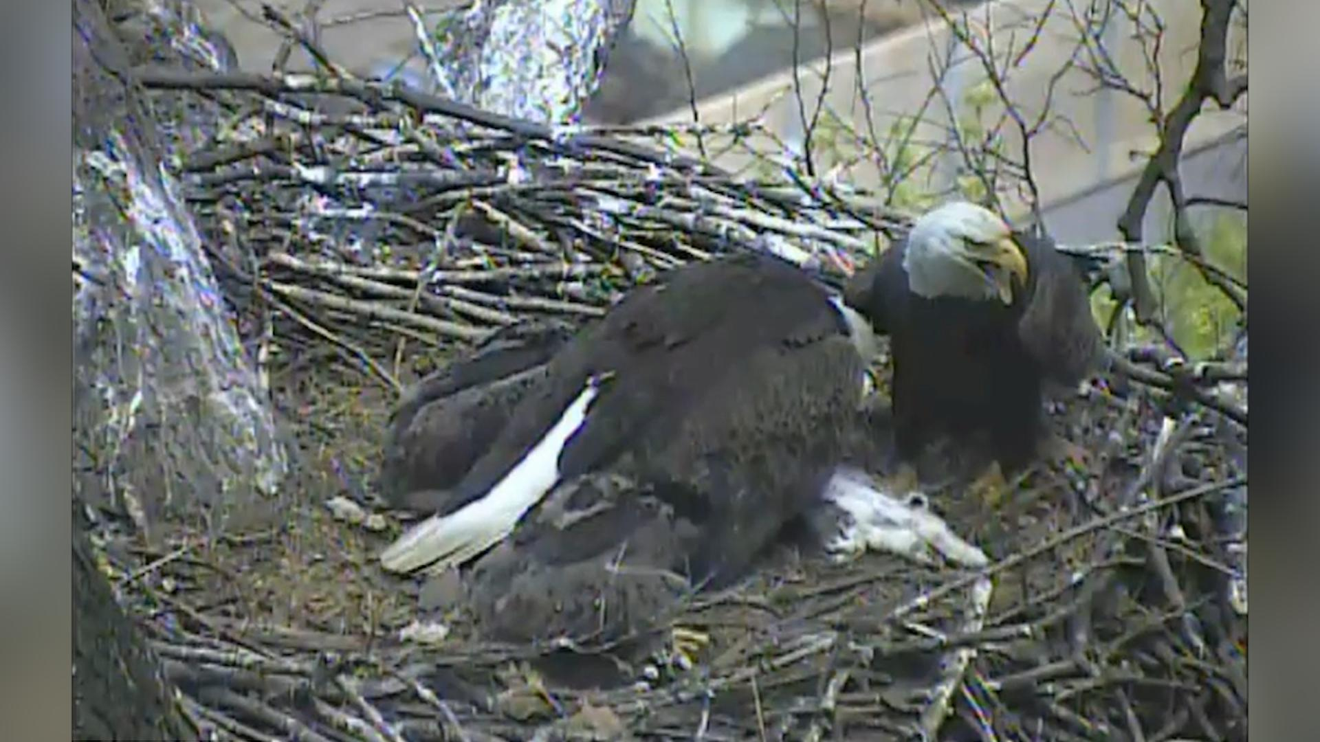 People love watching nature on nest cams — until it gets grisly